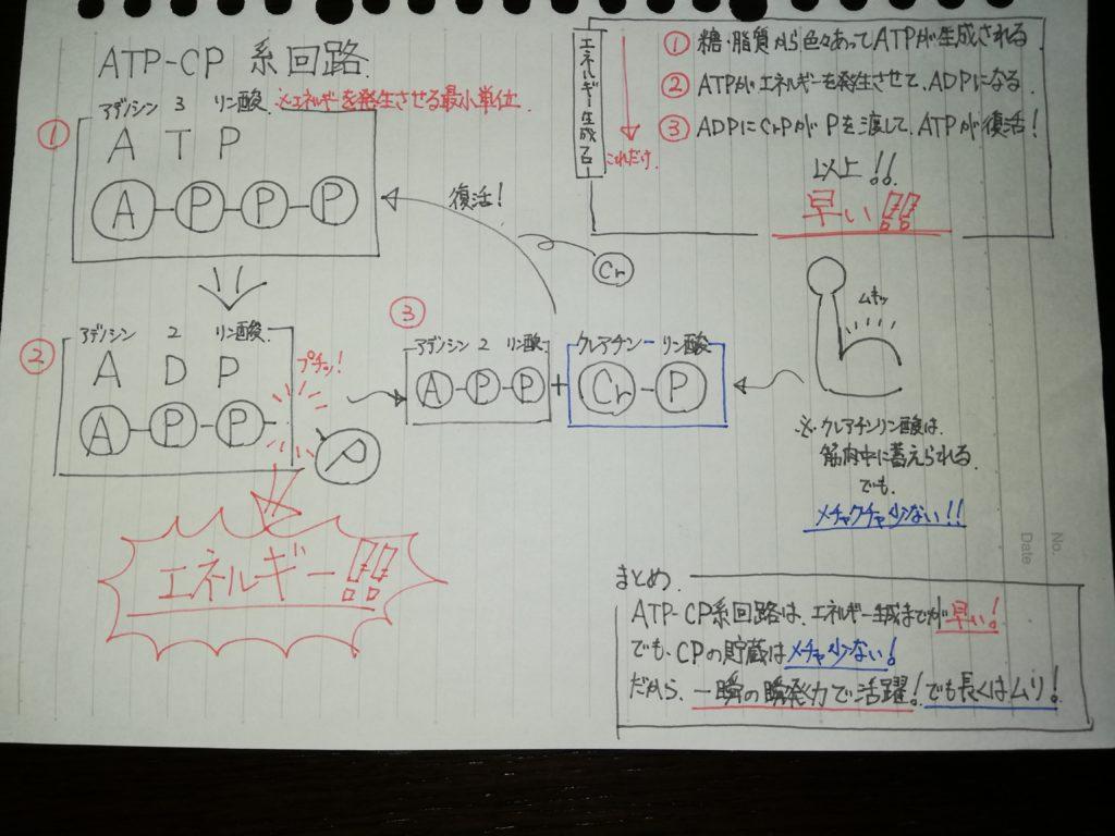 ATP-CP系回路図002