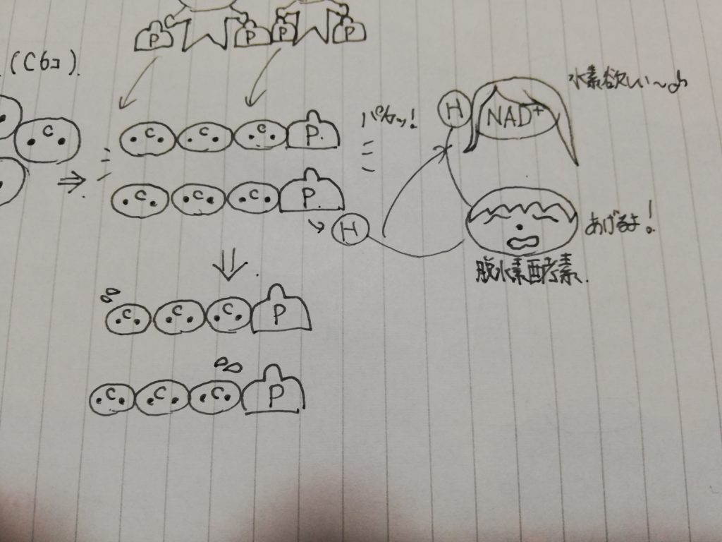 NAD+と脱水素酵素